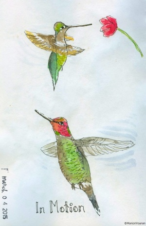 Hummingbirds in Motion