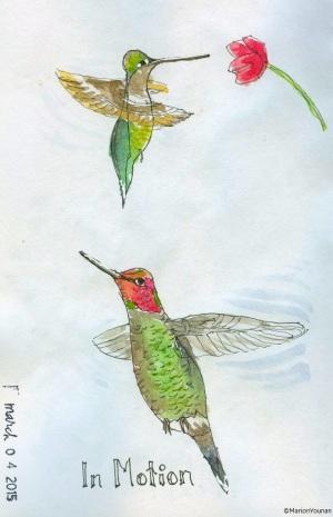 Hummingbirds in Motion