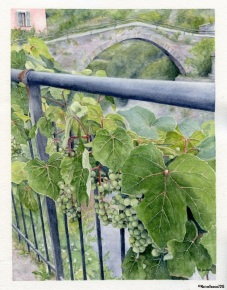 Grapes of Rocchetta Nervina (2016)- sold