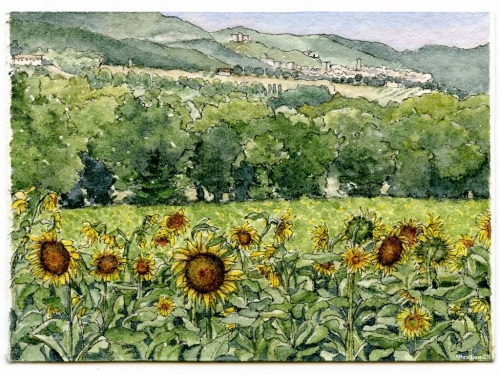 #33 - Sunflowers of Narni, Umbria