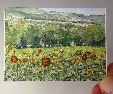 33 Sunflowers of Narni, Umbria studio aww