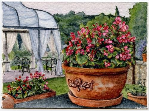 #35 - Begonias at Dusk