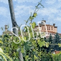 Barolo Vineyard Sold