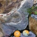 The Forgotten Oranges ofArezzo