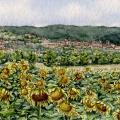 Narni's Sunflowers –sold