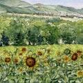 Sunflowers of Narni, Umbria –sold