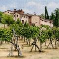 Tuscan Vineyard –sold