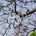 Eiffel Blossoms sold